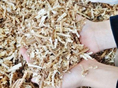 画像1: 良質!【無添加 かんな木くず 90リットル 5kg】国産杉100% 鉋くず おがくず 産廃 木屑 昆虫 ペット 店舗用